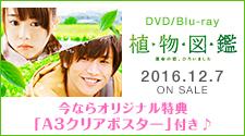 12/7 �A���}�� DVD