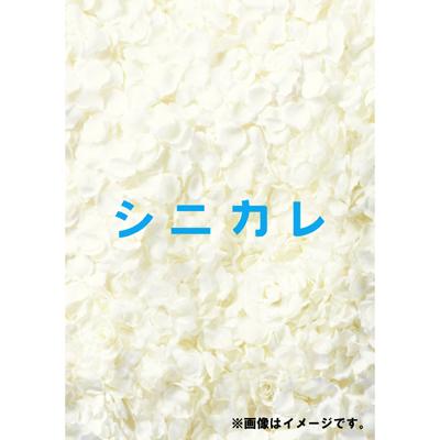 シニカレ完全版 ブルーレイBOX